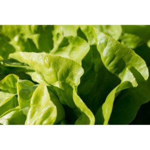 Grüner Salat mit Dressing(gross)